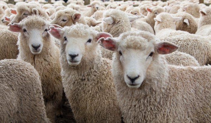 The Misunderstood Theory of Herd Immunity