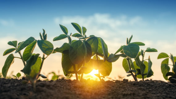 Vaccinating Plants: A Risky Technology?