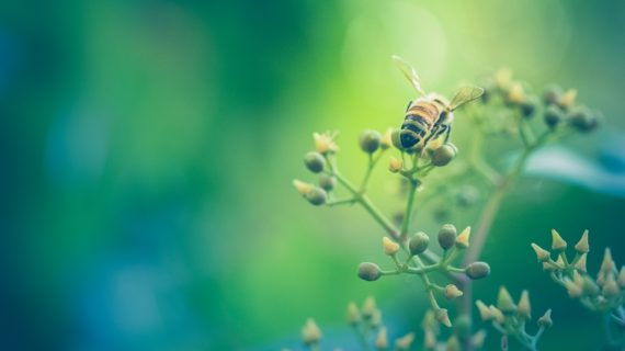 Vaccine for Bees Bypasses Lack of Antibodies