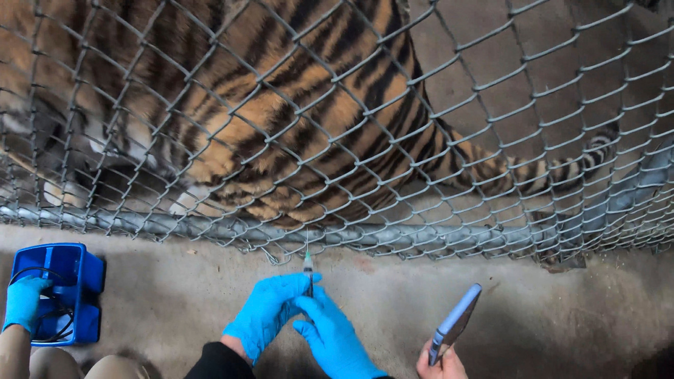 Zoo Animals Given Experimental COVID-19 Vaccine